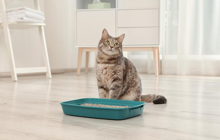 main of A Cat's Litter Box Helps Prevent Unwanted Surprises Around the House