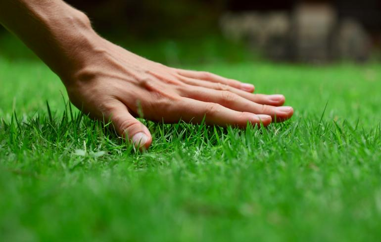 main of A Few Helpful Tips Can Help Anyone Improve Their Lawn Care